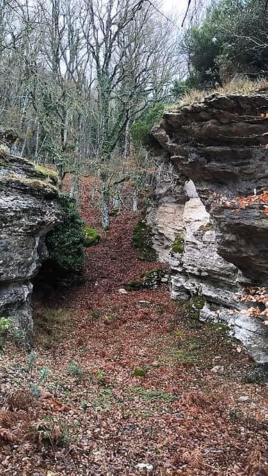robles y hayas valle de Allín