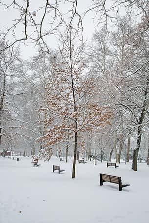 nevada-estella-28-02-2018-262