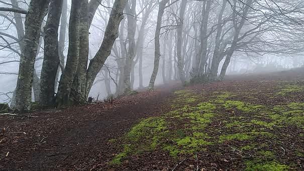 bosques valle de Allín