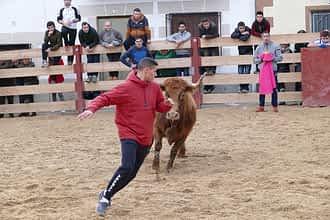 631-29c-San-Veremundo-estreno-temporada-vacas