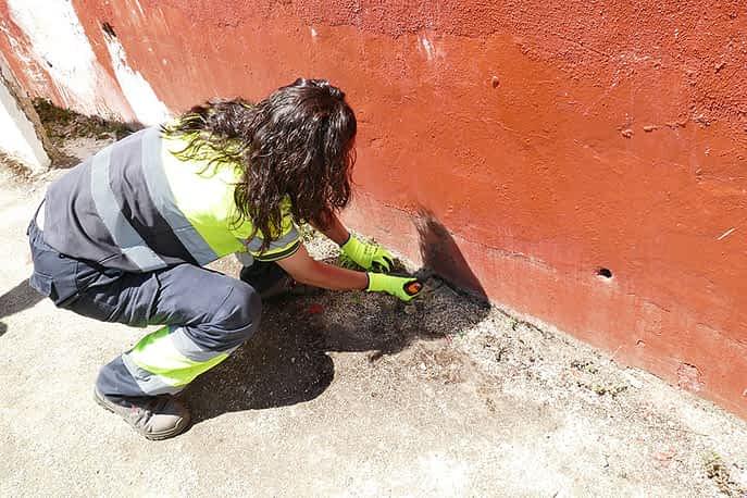 Una trabajadora realizando tareas en la plaza de toros.
