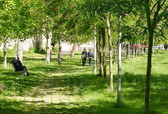Un estudio recomienda reponer 17 árboles emblemáticos de Estella