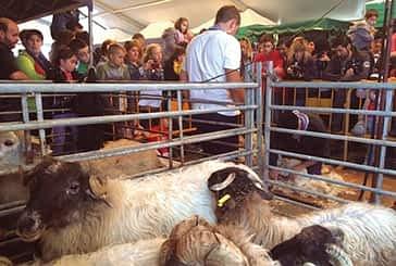 Améscoa homenajeó el oficio de los pastores