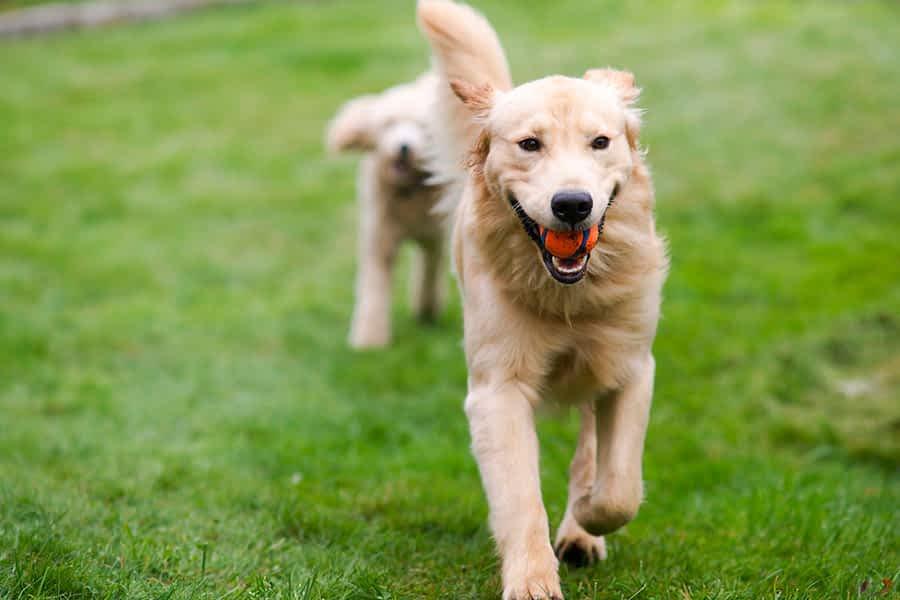 Estella contará con dos nuevas Zonas de Esparcimiento Canino