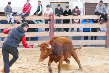 Esperadas vacas las de San Veremundo