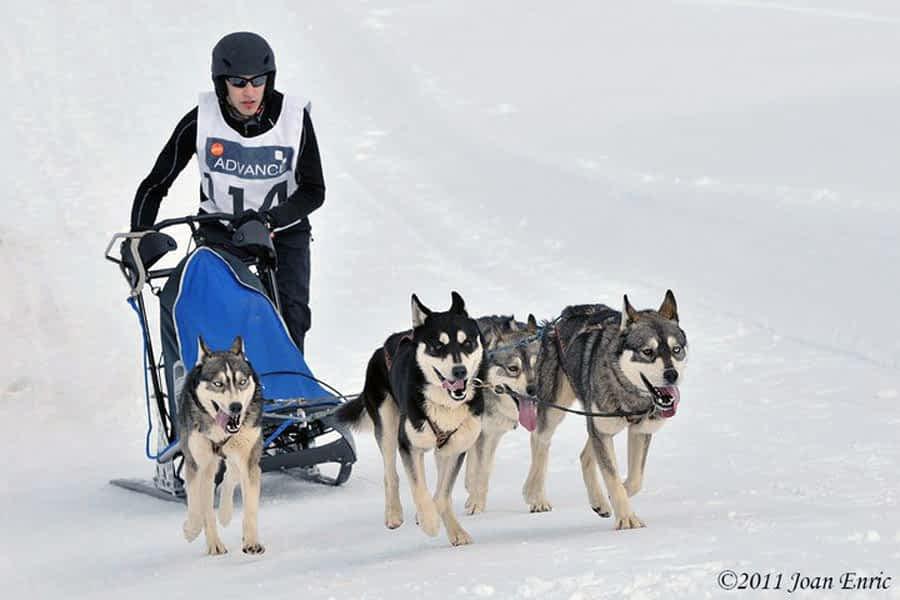Jorge Ibáñez, subcampeón de España de Mushing en trineo con 4 perros nórdicos