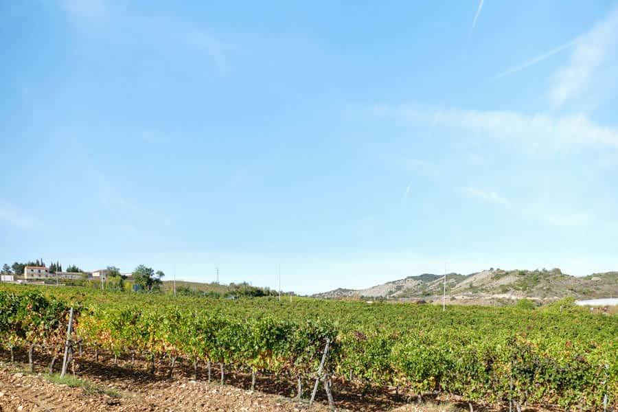 Tierra Estella ha cosechado más de 5,3 millones de kilos de uva