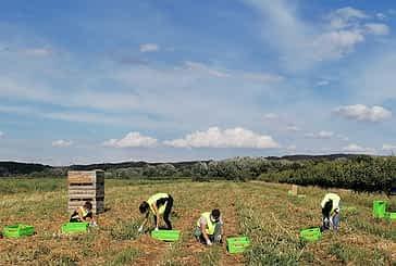 Una iniciativa para aprovechar el excedente del campo