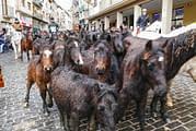 La nieve visitó por sorpresa las Ferias de San Andrés