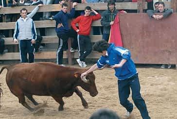 Vacas, hoguera, música y actividades infantiles por San Veremundo