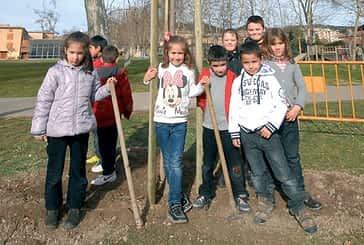 Los escolares repoblaron las calvas de Los Llanos