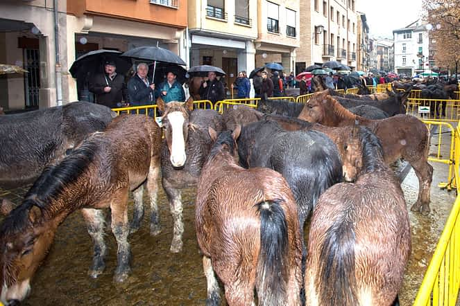 La lluvia deslució el mercado de ganado en la plaza Santiago.